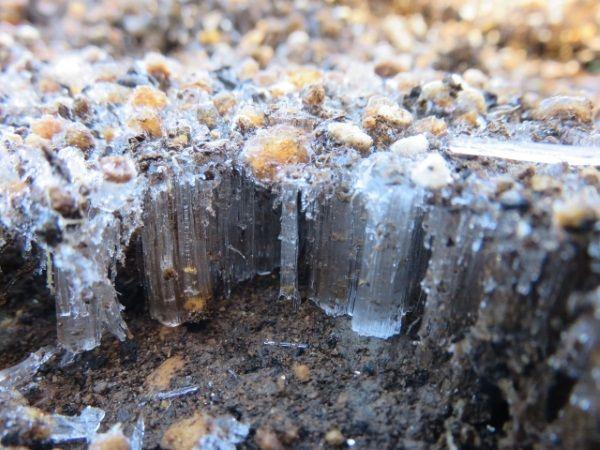 霜柱が地面を持ち上げる