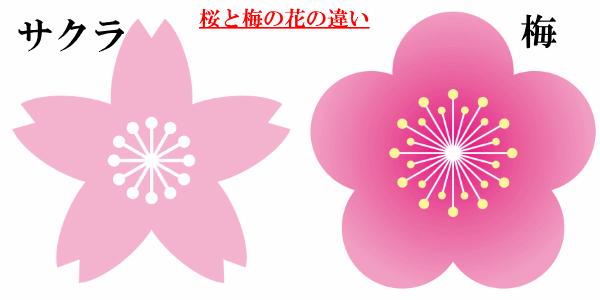 桜と梅の花の違いを図解